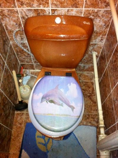 Dolphin Toilet